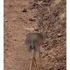 McCrae Kenya 2010 - 2010 - IMG_1271