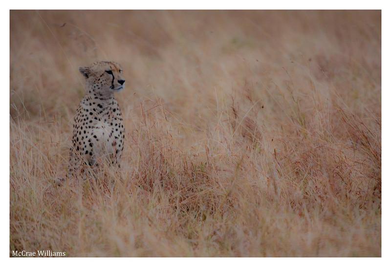 McCrae Kenya 2010 - 2010 - IMG_1139