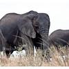 McCrae Kenya 2010 - 2010 - IMG_1128