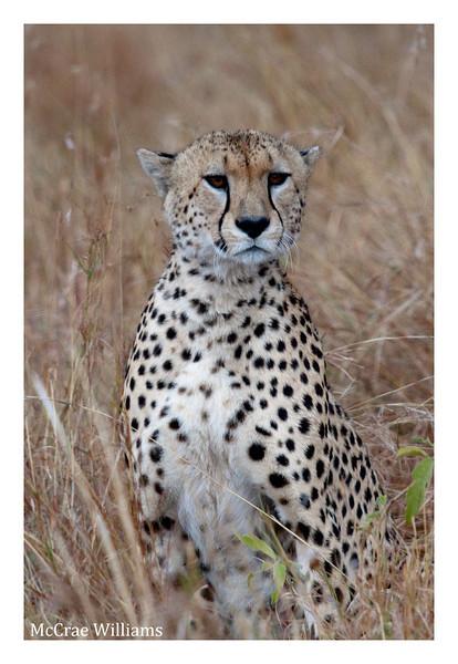 McCrae Kenya 2010 - 2010 - IMG_1156