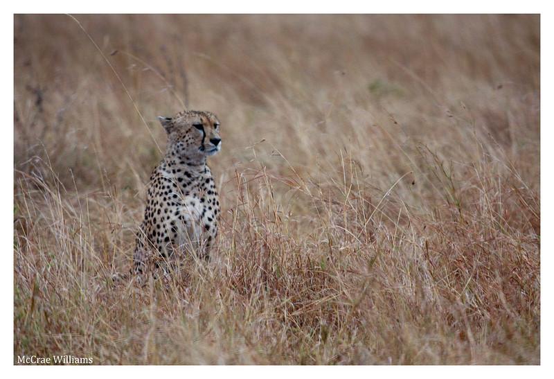 McCrae Kenya 2010 - 2010 - IMG_1142
