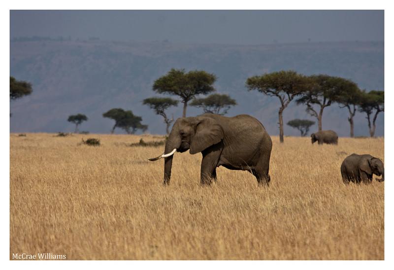 McCrae Kenya 2010 - 2010 - IMG_1233