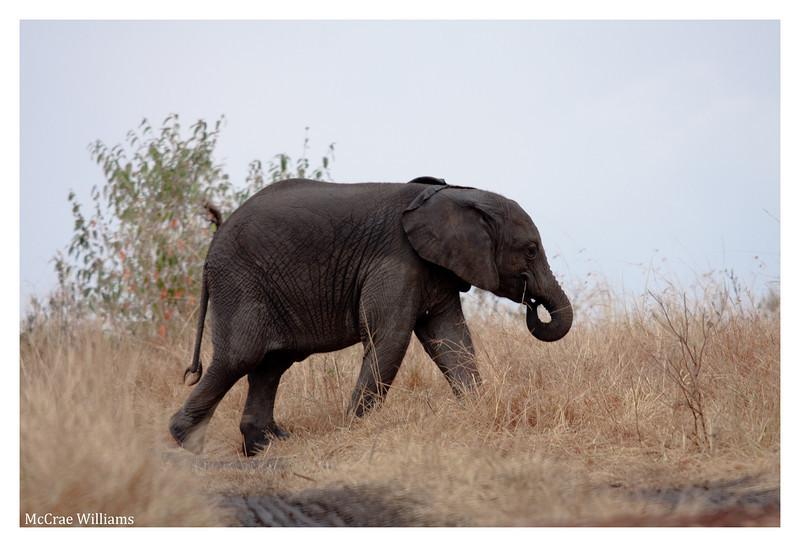 McCrae Kenya 2010 - 2010 - IMG_1125