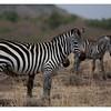 McCrae Kenya 2010 - 2010 - IMG_1047