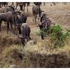 Kenya 2010 - 2010 - KENY70901