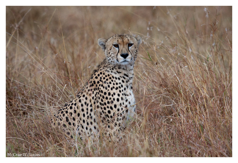 McCrae Kenya 2010 - 2010 - IMG_1163