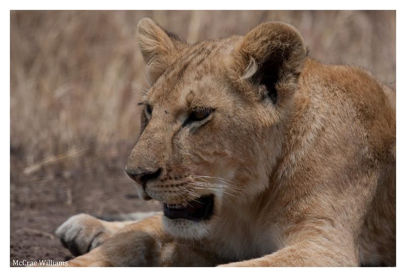 McCrae Kenya 2010 - 2010 - IMG_1113