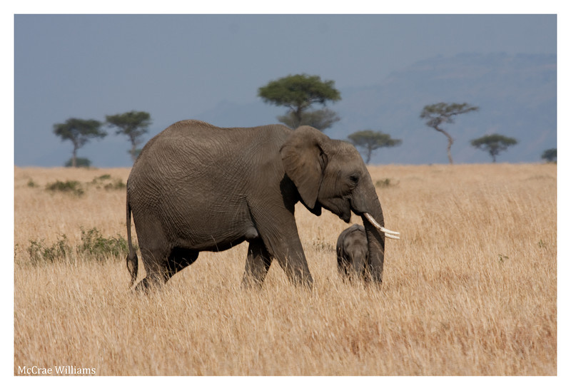 McCrae Kenya 2010 - 2010 - IMG_1247