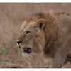 McCrae Kenya 2010 - 2010 - IMG_1284