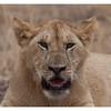 McCrae Kenya 2010 - 2010 - IMG_1107