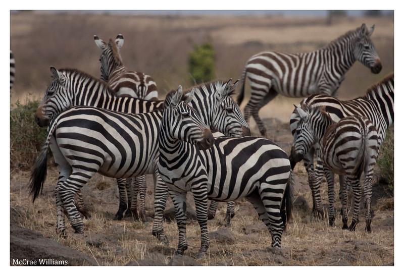 McCrae Kenya 2010 - 2010 - IMG_1043