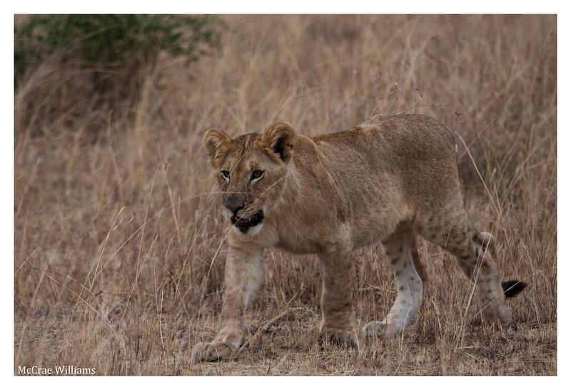 McCrae Kenya 2010 - 2010 - IMG_1077