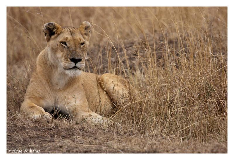McCrae Kenya 2010 - 2010 - IMG_1087