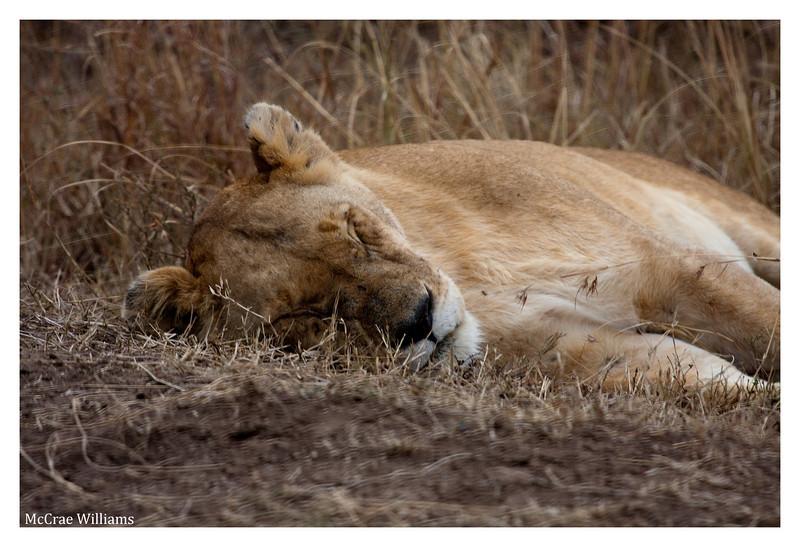 McCrae Kenya 2010 - 2010 - IMG_1100