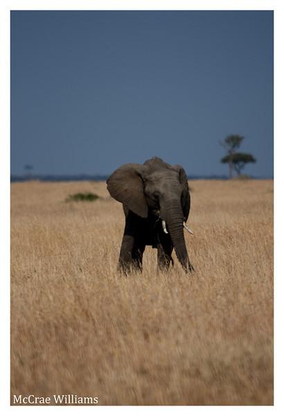 McCrae Kenya 2010 - 2010 - IMG_1245
