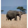 McCrae Kenya 2010 - 2010 - IMG_1256