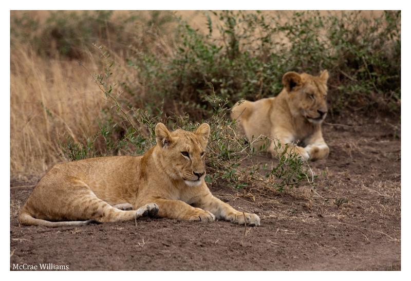 McCrae Kenya 2010 - 2010 - IMG_1085