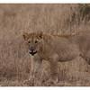McCrae Kenya 2010 - 2010 - IMG_1076