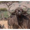 McCrae Kenya 2010 - 2010 - IMG_1221