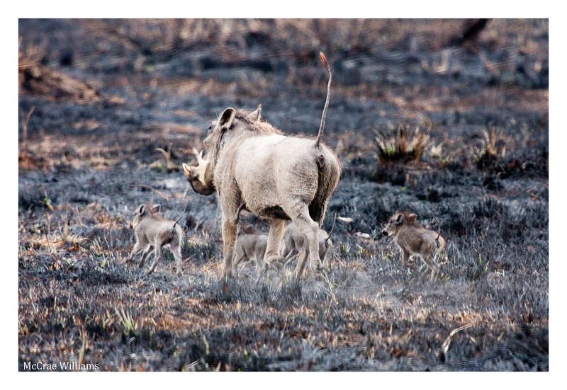 McCrae Kenya 2010 - 2010 - IMG_1117