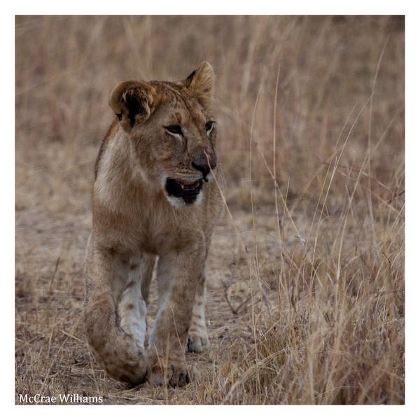 McCrae Kenya 2010 - 2010 - IMG_1080