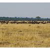 Kenya 2010 - 2010 - KENY70631