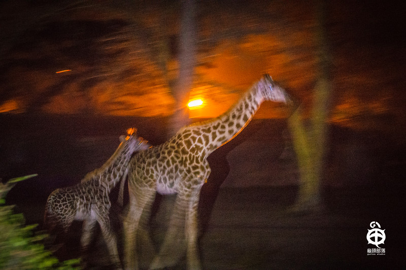 肯亚,攻略,马塞马拉,非洲,动物大迁徒,大搬迁,野生动物,大草原,原野,背包旅行,自助游,旅游攻略,旅游,说走就走,野生动物,自然生态,kenya,Masai mara,Great Migration,Africa,Wild Life,Safari tour,guitou travel,guitou studio,guitou,龟头部落