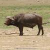 ,  Amboseli National Park, 1240m