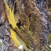 bark from Dendrosenecio keniodendron