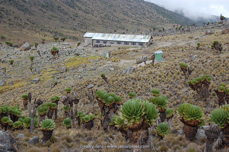 Teleki Lodge 4200m + Dendrosenecio keniodendron