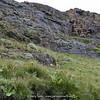 habitat Eucomis bicolor