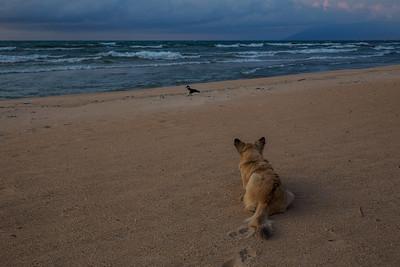 Lake Malawi A dog stalks a bird on Kande Beach on Lake Malawi.