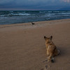 "<b>Lake Malawi</b> A dog stalks a bird on Kande Beach on <a href=""http://en.wikipedia.org/wiki/Lake_Malawi"" target=""link target"">Lake Malawi</a>."