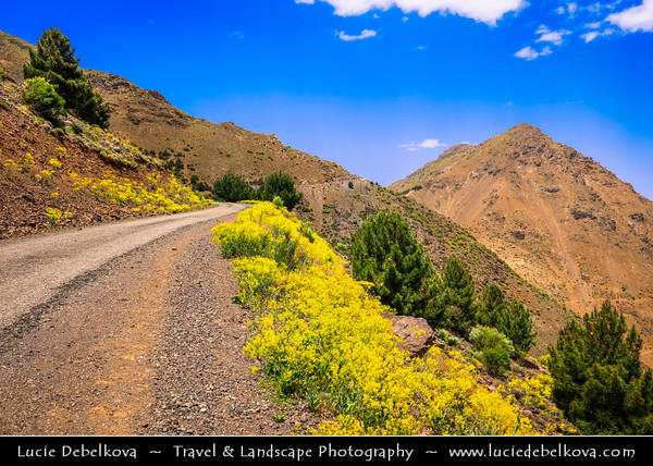 Northern Africa - Kingdom of Morocco - High Atlas Mountains - Toubkal National Park - Rhirhaia valley towards Tizi N'Tacheddirt - Tachdirt - Mountains valley surrounded with mighty snow capped ridges