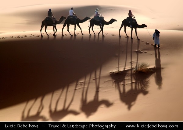 Africa - Morocco - Er Rachidia - Sahara Desert - Merzouga - Sand Dunes of Erg Chebbi - One of Morocco's two Saharan ergs - Large sea of dunes formed by wind-blown sand - 150 m high dunes are beginning for classic sahara setting - Man of the desert - Local Bedouin walking through desert with camels