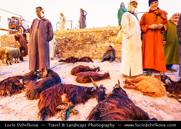 Africa - Morocco - Souss-Massa Region - Chtouka Aït Baha Province - Ait Baha - Town with red houses in Anti Atlas area - Traditional market with animals - goats and sheep
