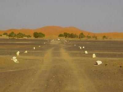 Desert_02