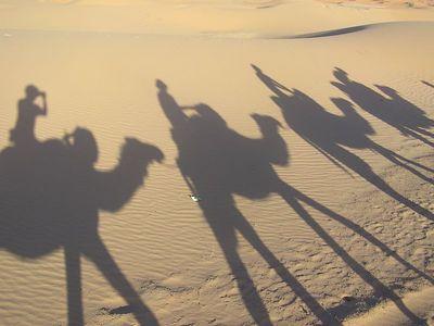 Shadows_3