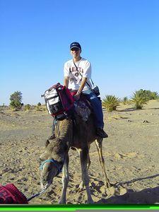 Jimmy_Camel