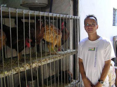 Jimmy_Chickens