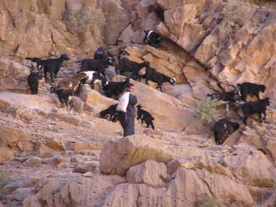 Gorge_Goats