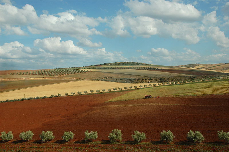 The Fields of Morocco
