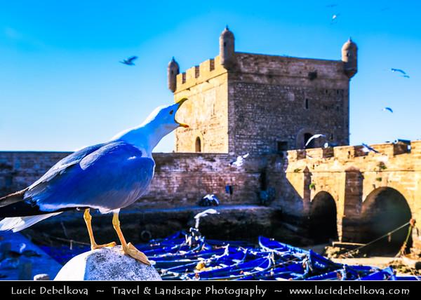 Africa - Morocco - Atlantic coast - Essaouira - UNESCO World Her