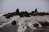 Seal Island