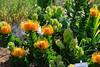 Proteus in Kirstenbosch Gardens