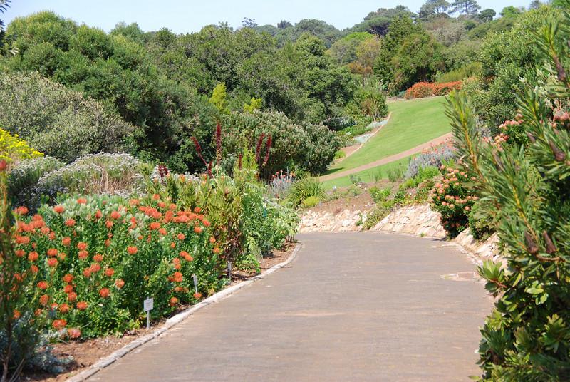 Walkway in Kirstenbosch Gardens