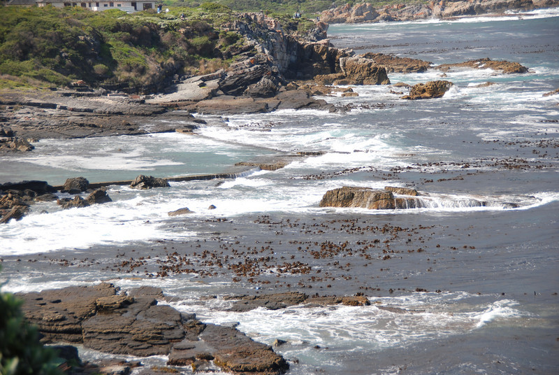 Coastline, Hermanus