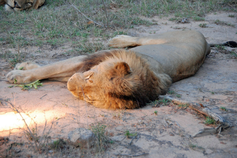Afternoon Nap, Inyati Game Reserve