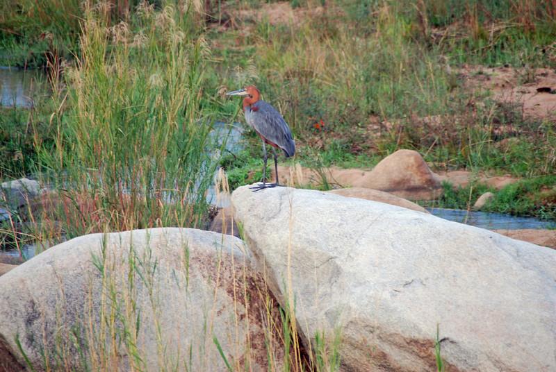 Birdie, Kruger National Park