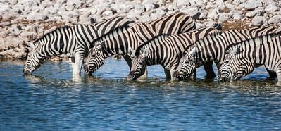 Etosha National Park, Namibia, 2008